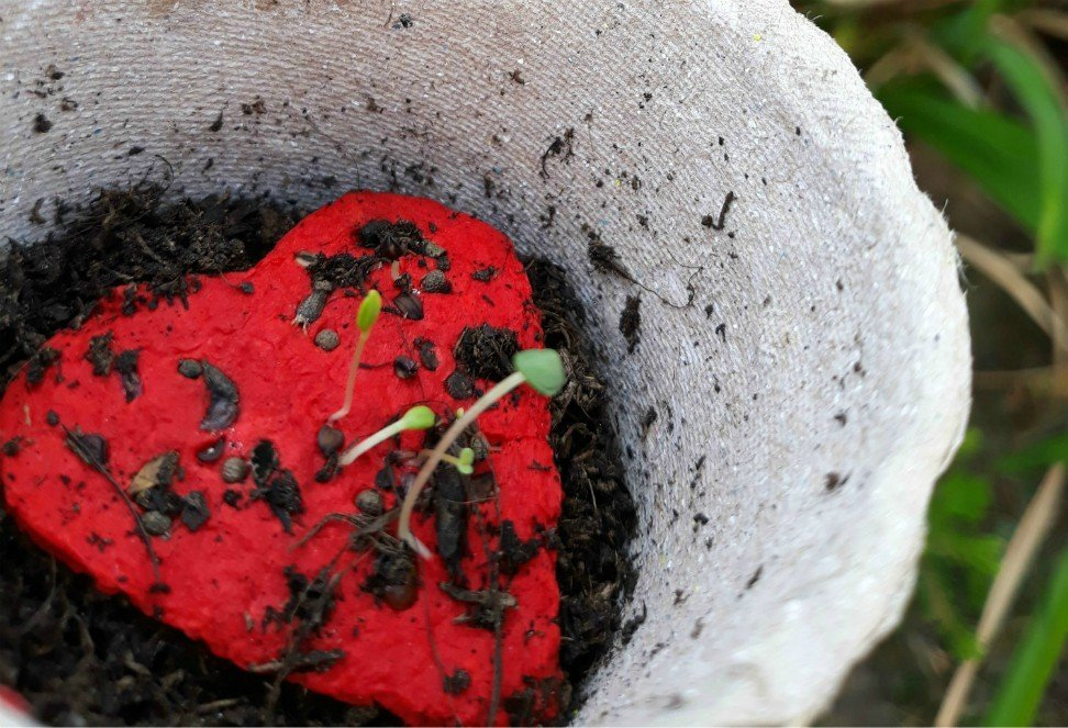 cuore-di-carta-seminabile