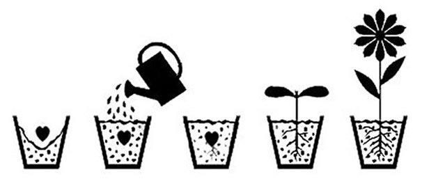 istruzioni semina carta che germoglia